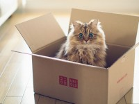 cat-box-ben-torode-cute-lovely-kitten-animal-floor-wallpaper-
